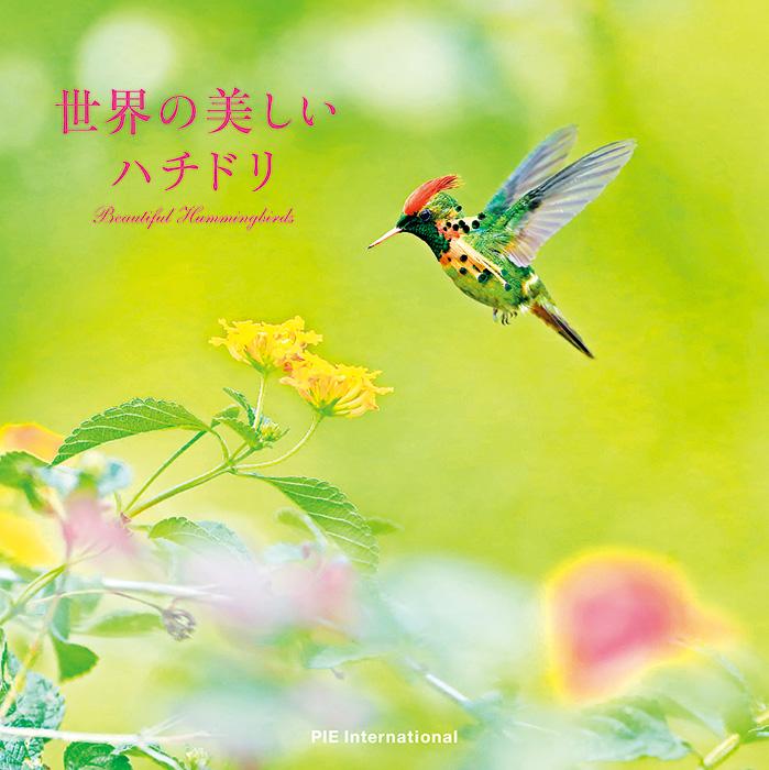 ハチドリの画像 p1_20