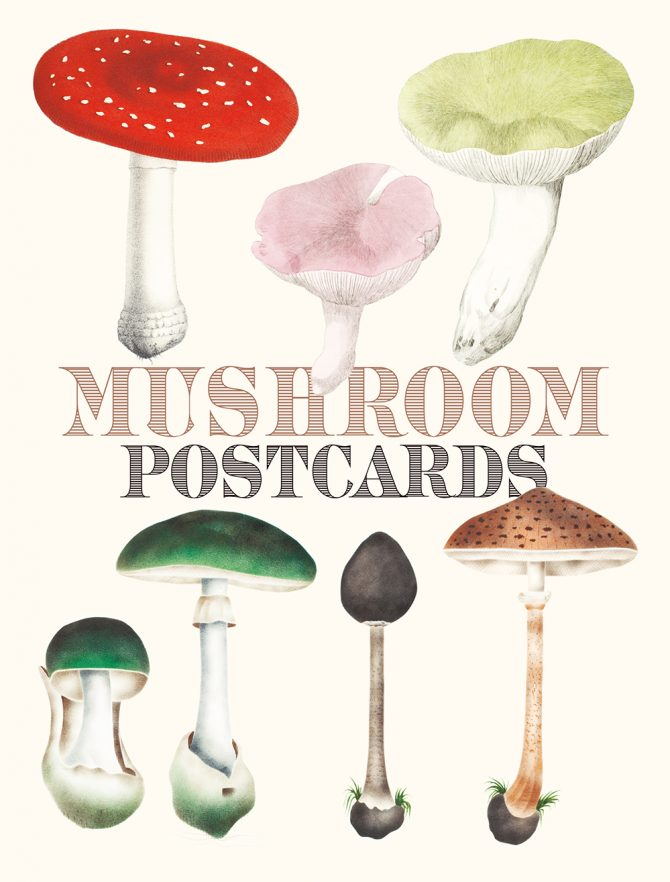 "English edition of ""Mushroom Postcards"" will be available from December 2020 in US/Europe."